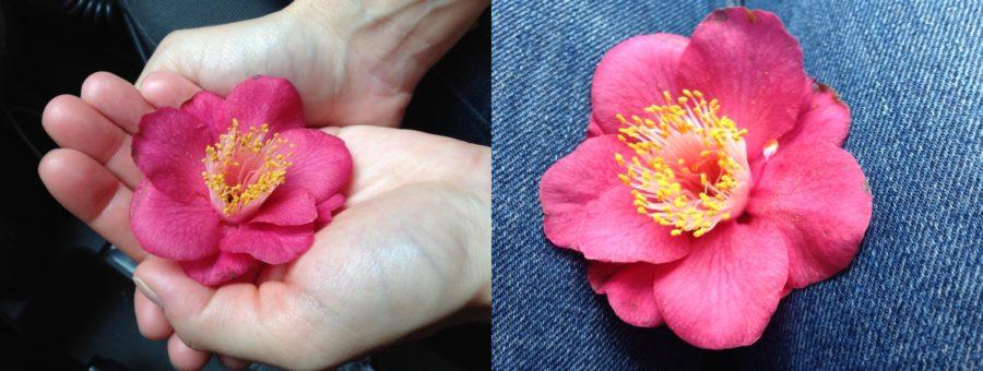 Floriterapia, la Via del Cuore