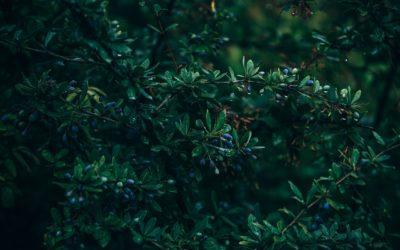 Erbe selvatiche: i consigli per una corretta raccolta