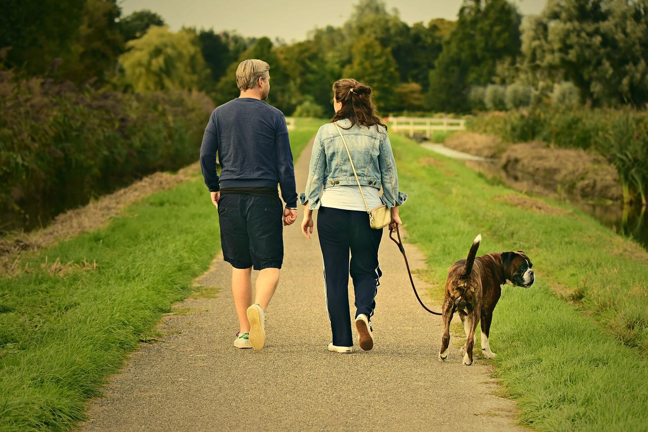 leishmaniosi cane