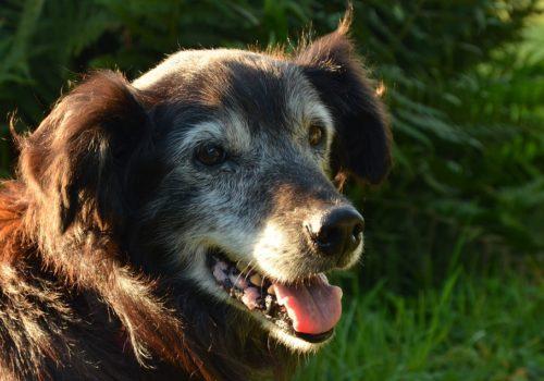 Cane anziano: aiutarlo a vivere meglio con la fisioterapia