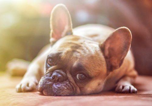 Animali domestici: 10 consigli per evitare il colpo di calore